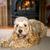 verspielt · Tennisball · Spiel · Hund · glücklich · grünen - stock foto © carenas1