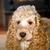テニスボール · ゲーム · 犬 · 幸せ · 緑 - ストックフォト © carenas1