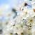 hermosa · flor · blanca · asombroso · flores · hojas · verdes · naturaleza - foto stock © carenas1