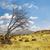 драматический · небе · старые · одиноко · дерево · закат - Сток-фото © carloscastilla