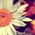 аннотация · природы · зеленый · солнце · вспышка · мира - Сток-фото © carloscastilla