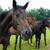 fehér · barna · vad · lovak · mező · kettő - stock fotó © castenoid