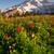 Полевые · цветы · цвести · пейзаж · лет · растений · рай - Сток-фото © cboswell