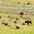 bisão · verão · árvore · grama · campo · EUA - foto stock © cboswell