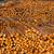 drewna · cięcia · drzewo · tarcica · młyn - zdjęcia stock © cboswell