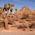 silhueta · cacto · deserto · pôr · do · sol · céu · sol - foto stock © cboswell