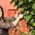 pretty woman smiling prunes cherry tree backyard fruit stock photo © cboswell