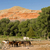 corralled horses wyoming badlands ranch livestock animals stock photo © cboswell