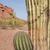 美しい · 山 · 砂漠 · 風景 · 背景 · 夏 - ストックフォト © cboswell