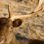 美しい · 従事 · 野生動物 · 男性 · バック · 枝角 - ストックフォト © cboswell