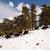 バイソン · 雪 · 冬 - ストックフォト © cboswell
