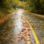 molhado · chuvoso · outono · dia · folhas · cair - foto stock © cboswell