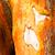 örökzöld · fa · ugatás · textúra · naplemente · fal - stock fotó © cboswell