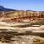 描いた · 砂漠 · 風光明媚な · 風景 · 古代 · ツリー - ストックフォト © cboswell
