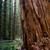 cedro · albero · foresta · immagine · Libano - foto d'archivio © cboswell