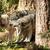 wild animal wolf pack standing playing north american wildlife stock photo © cboswell