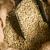 greggio · chicchi · di · caffè · semi · tela · ruvida · produzione - foto d'archivio © cboswell