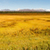 denali range central alaska wilderness area stock photo © cboswell
