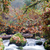 fall autumn forest stream bubbling brook mossy river stock photo © cboswell