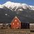 livestock wind break horse leaning red barn mountain ranch stock photo © cboswell
