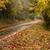 outono · estrada · colorido · mata · árvore - foto stock © cboswell