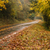 najaar · weg · kleurrijk · loof · bos · boom - stockfoto © cboswell