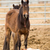 horse mother stands over tired colt foal offspring stock photo © cboswell