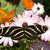 przekąska · kwitnąć · twórczej · martwa · natura · charakter · zielone - zdjęcia stock © cboswell