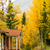 屋根 · メイプル · ツリー · 秋 · 自然 · 葉 - ストックフォト © cboswell