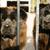 piękna · puszysty · rzadki · czarny · kolor - zdjęcia stock © cboswell