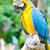papagaios · natureza · amor · pássaro · verde · vida - foto stock © chatchai