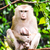 macaco · tropical · floresta · bebê · mãe - foto stock © chatchai