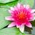 赤 · 穏やかな · 池 · 花 · 水 - ストックフォト © chatchai