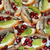 пластина · гранат · семян · белый · фрукты · группа - Сток-фото © cherezoff