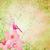 roze · weinig · bloem · fairy · groene · voorjaar - stockfoto © cherju