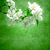 blossoming tree branch on green grunge background stock photo © cherju