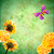 green background with yellow flowers and butterfly stock photo © cherju