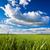 летнее · время · зеленая · трава · синий · белый · облака · небе - Сток-фото © chesterf