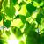 verde · vibrante · floresta · sol · brilhante · folhas - foto stock © chesterf