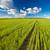 зеленый · лет · области · синий · небе · весны - Сток-фото © chesterf