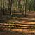 пути · лес · рассвета · плотный · тумана - Сток-фото © chesterf