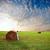 stro · baal · zonsondergang · oogst · hond · land - stockfoto © chesterf