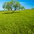 пышный · зеленый · фермы · землю · пейзаж · холмы - Сток-фото © chesterf