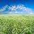 エンドレス · 緑の草 · フィールド · 青空 · 雲 · ツリー - ストックフォト © chesterf