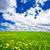 żółty · zielona · trawa · Błękitne · niebo · słońce · piękna - zdjęcia stock © chesterf