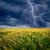 relâmpago · acima · nuvens · primavera · pôr · do · sol · campo - foto stock © chesterf