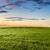 tramonto · sole · campo · verde · fresche · erba - foto d'archivio © chesterf