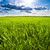 солнце · области · зеленый · небе · весны - Сток-фото © chesterf