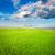 新鮮な · 緑 · 道路 · 青 · 曇った · 空 - ストックフォト © chesterf