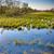 tavasz · árvíz · víz · erdő · tájkép · medence - stock fotó © chesterf